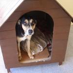 A  casinha do cachorro